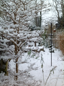 The viburnum branches are made to hold snow!