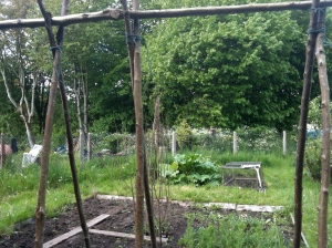 Allotment, May 2013